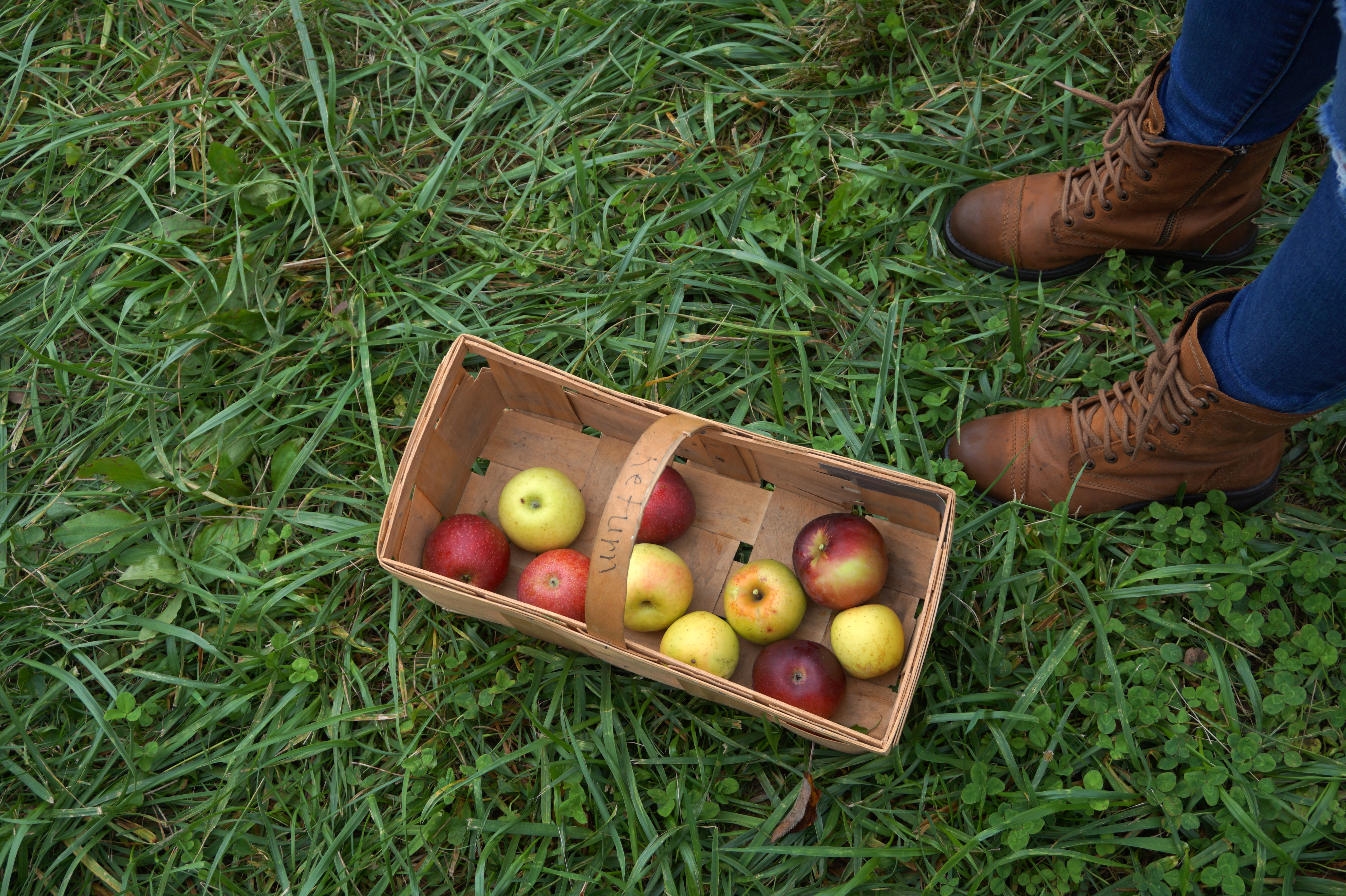 Day Date- Apple Picking
